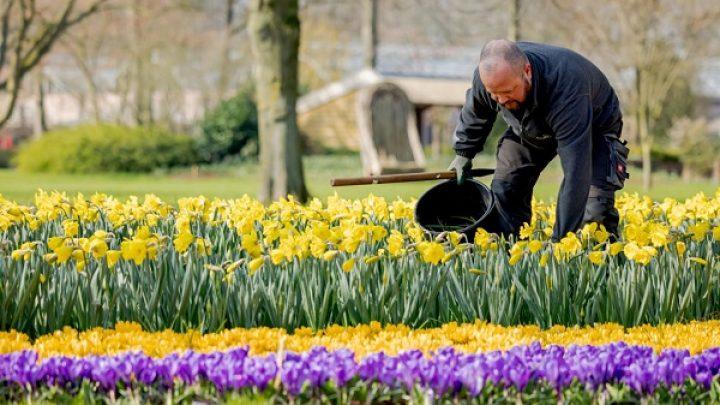 Tuinmedewerker